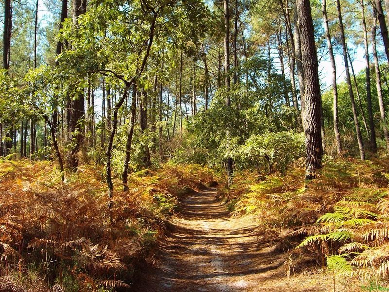 beuvry la forêt agenda