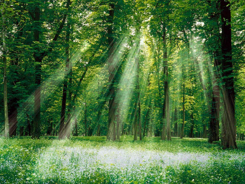 foret verte lumière